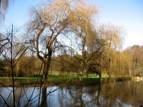 River Wey, Surrey