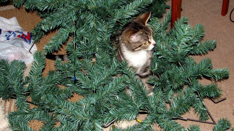 cat in artificial Christmas tree