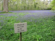 The bluebells were late this year.