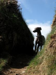 2014.04.09 Luna the Dog (c) Merryn Robinson