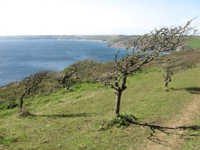 Carlithey Point and Veryan Bay