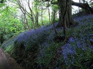 2014.05.08 (5) Pendennis Woods