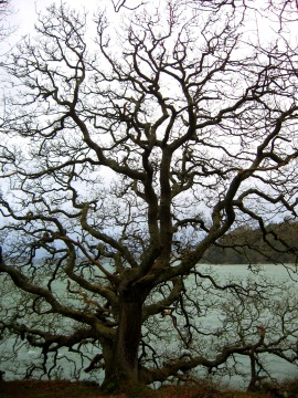 I began 2015 with a wintery stomp on an unseasonably warm but predictably dull day where the river below Trelissick was a swampy teal under a pewter sky: nothing remarkable, a fitting start, I suppose, for a year in which looking back I thought I did nothing.